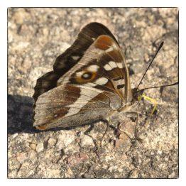 Wenskaart foto grote weerschijn Vlinder, Atelier for Hope Doetinchem